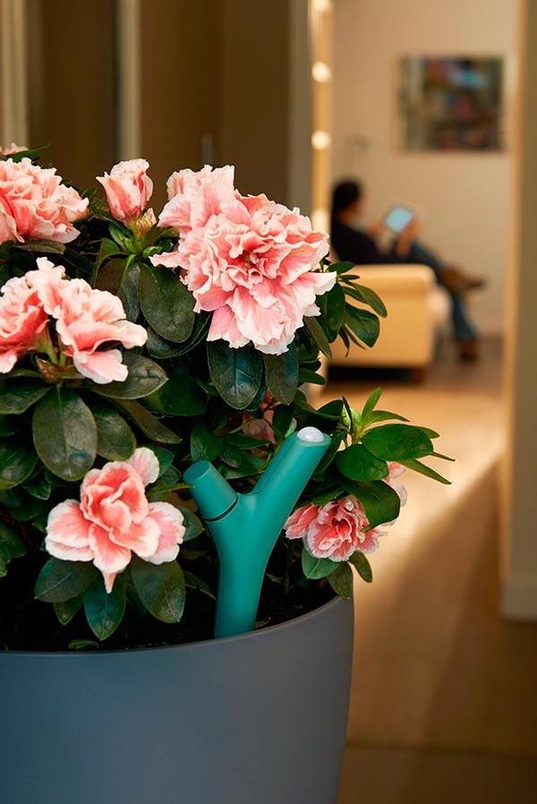 Parrot-Flower-Power-con-planta