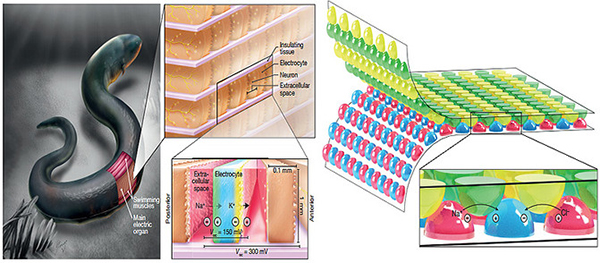 fuente de energía biocompatible