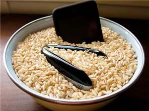 movil en arroz