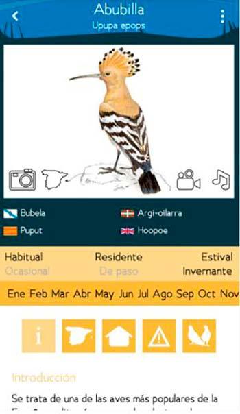 app Aves de España Abubilla