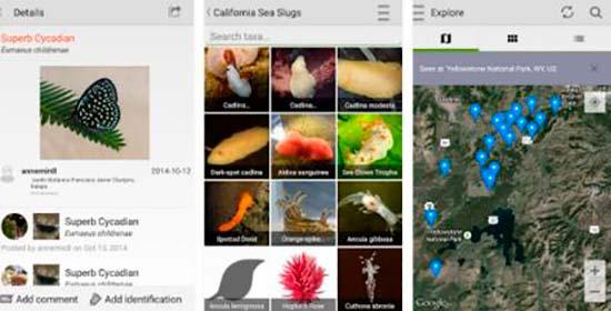app iNaturalist