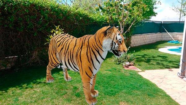 tigre 3D en casa