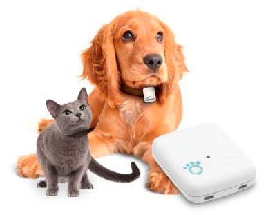 GPS para mascotas